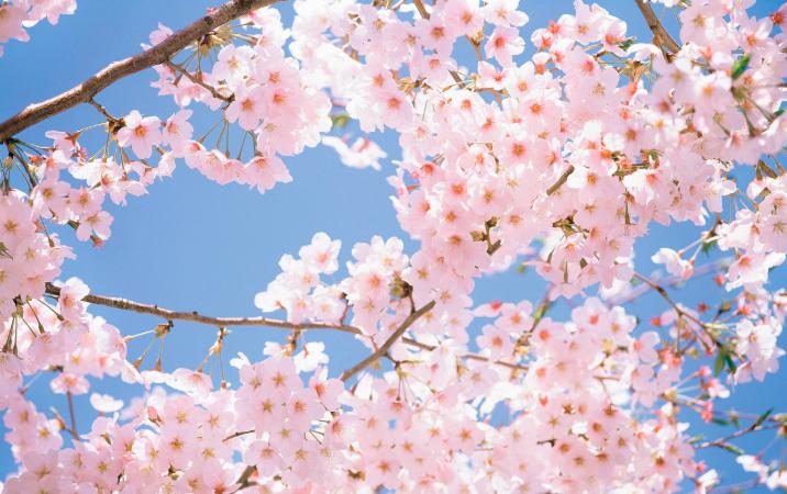 日本留学の魅力